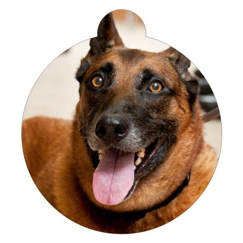 Belgian Malinois  Picture ID tag